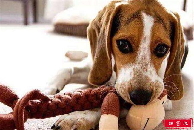十种狗的行为解读 狗狗的肢体语言