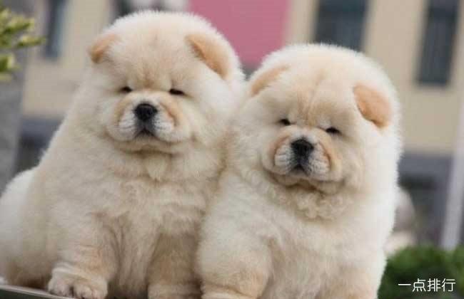 世界十大忠诚的狗排名 中华田园犬无可取代