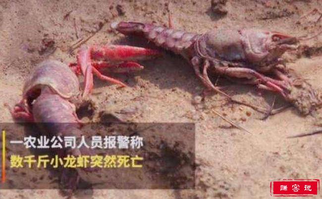 熊孩子毒死小龙虾 最讨人厌的孩子重出江湖