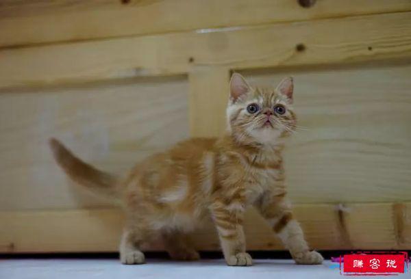 世界十大最漂亮的猫咪 第一的是波斯猫