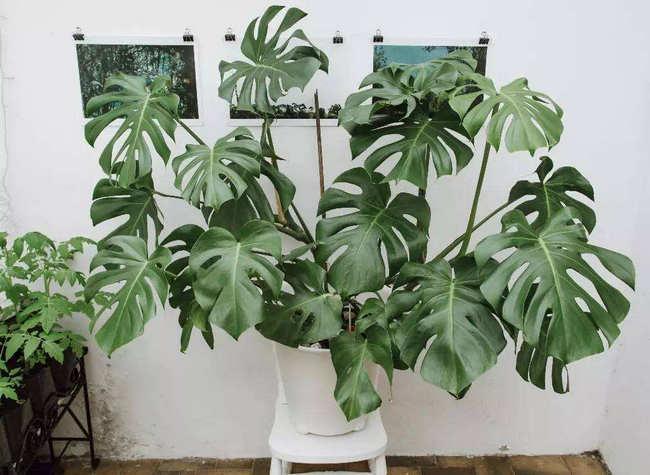室内最好养植物排名 好看又好养