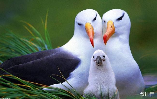 世界十大最浪漫的动物排名 有的比人类的感情还要忠贞