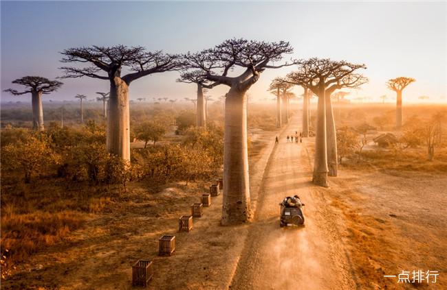 世界十大最受欢迎的树 用来充当监狱的树你见过吗