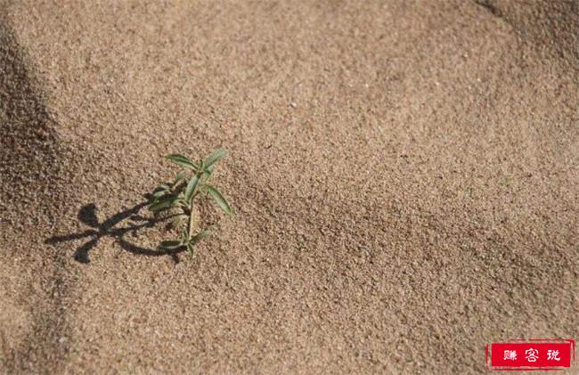 地球快没沙子了 全世界最尴尬的境遇将要来临