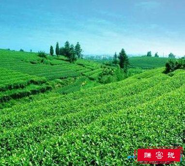 中国四大名茶排名 四大名茶那四种