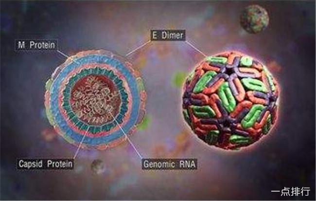 世界十大恐怖病毒排名 登革热病毒至今没有可预防疫苗