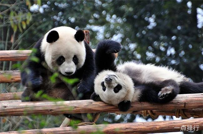 世界活化石动物大全 国宝熊猫已存在800万年