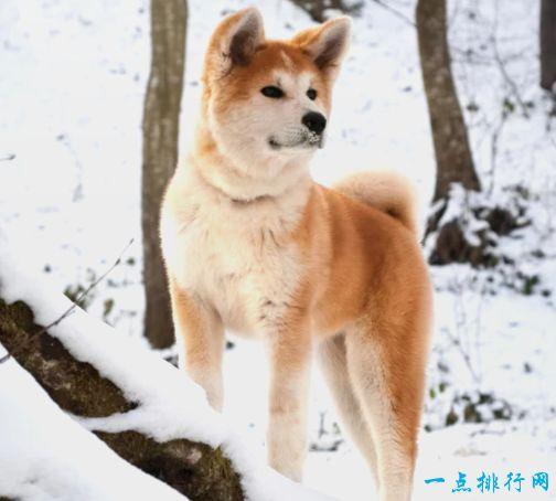 最不怕冷的10种狗狗 阿拉斯加雪橇犬上榜
