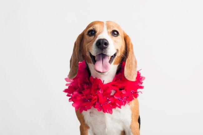 世界上最受欢迎的十大家犬品种 最值得养的宠物犬