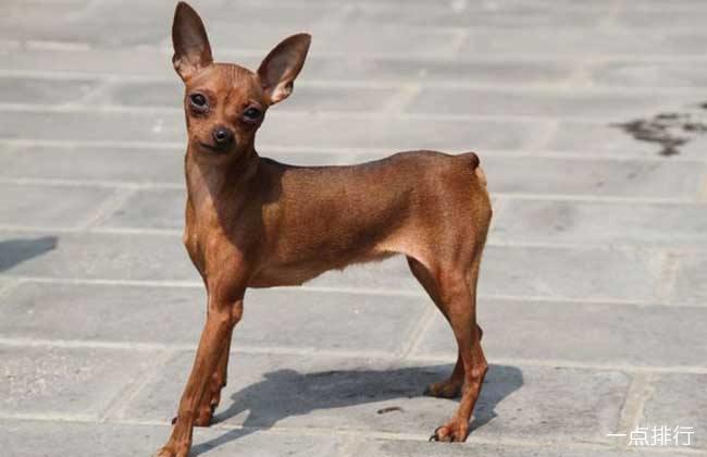 十大最好养的宠物狗排名 什么宠物狗便宜好养