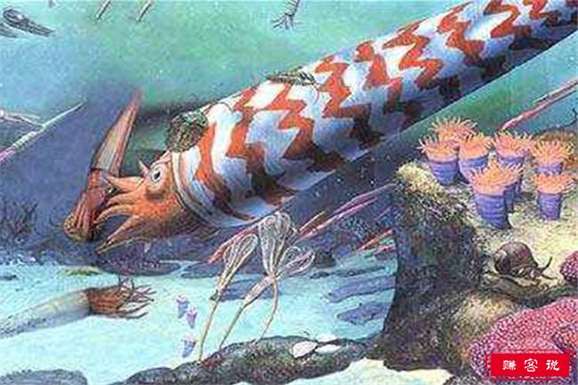已经灭绝的十大可怕动物 直壳鹦鹉螺可长到6米