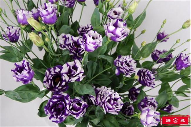 世界上最贵的10种鲜花 最美昙花是无价之宝