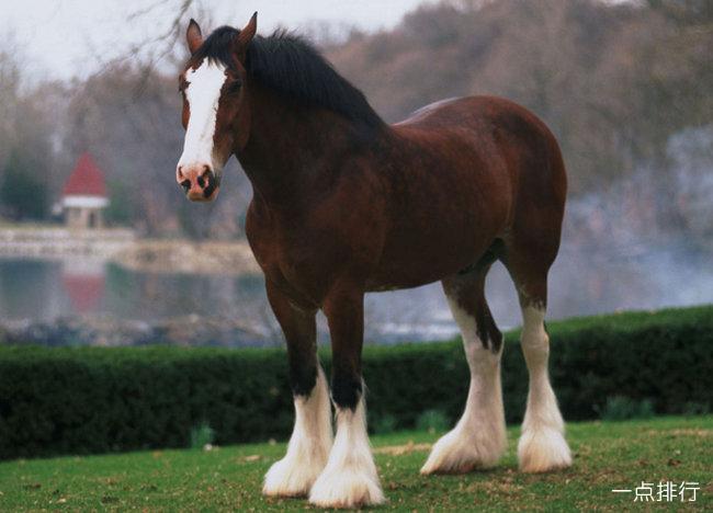 世界上最昂贵的马排名 阿拉伯马最古老而又名贵
