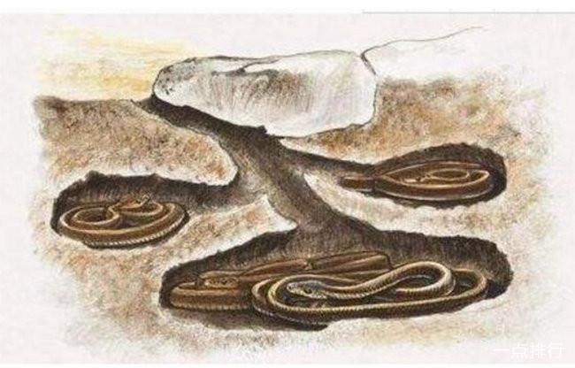 蛇-报团冬眠