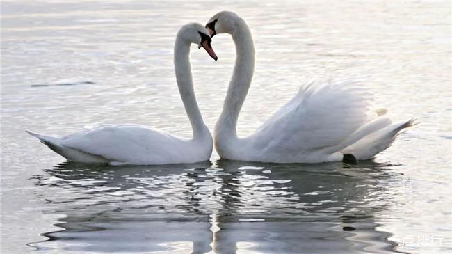 世界十大一夫一妻的动物 比人类更加忠贞的十种动物