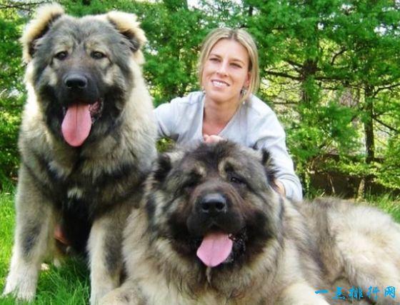 世界上最大的狗排名 德国大丹犬排第一