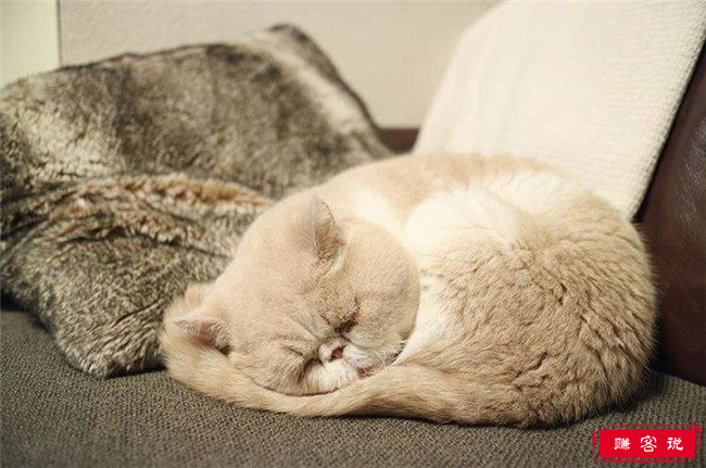 猫-钻钻被窝