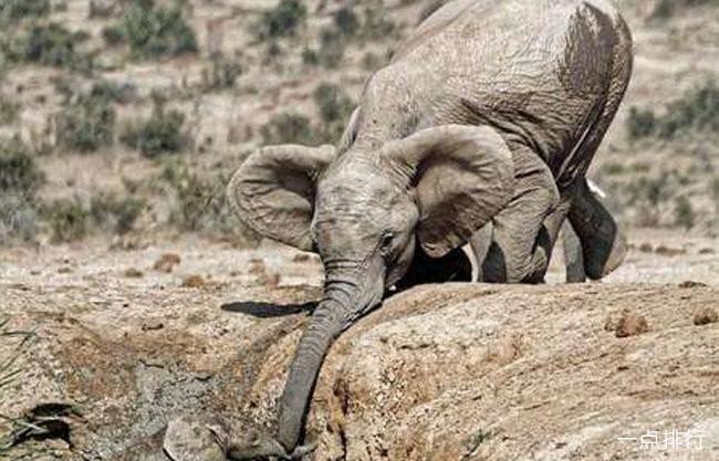 小象跌落瀑布死亡 5头大象为救小象同时丧生
