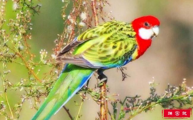 世界上寿命最长的十种鸟 葵花凤头鹦鹉能活80年