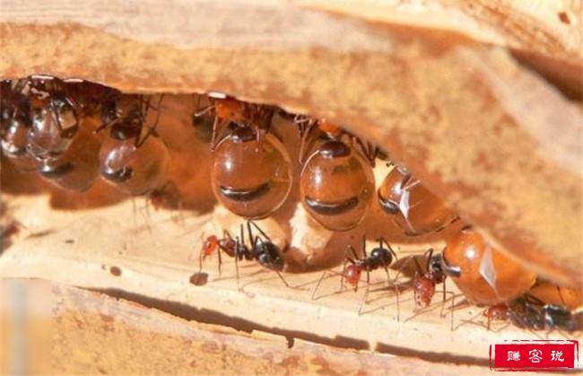 十种战斗力最强的昆虫排行榜 狼蛛霍克黄蜂最为凶残