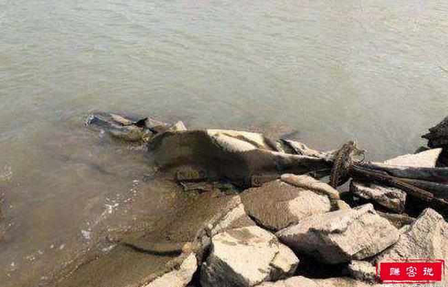 三峡水怪被打捞 结局让人大呼意外