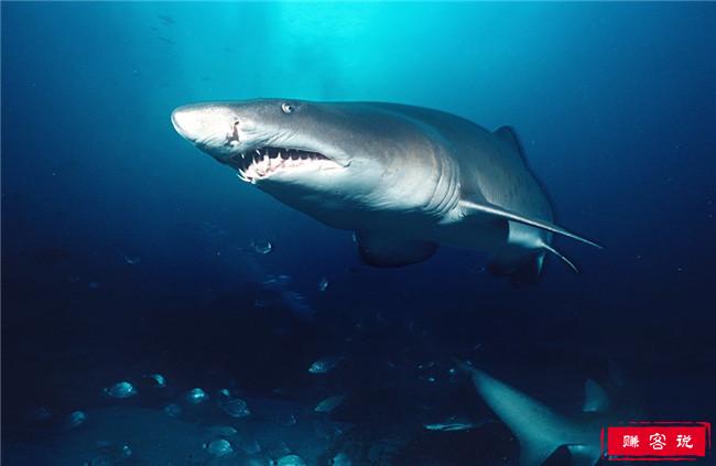 史上最危险十大海洋生物 大白鲨仅排倒数第三