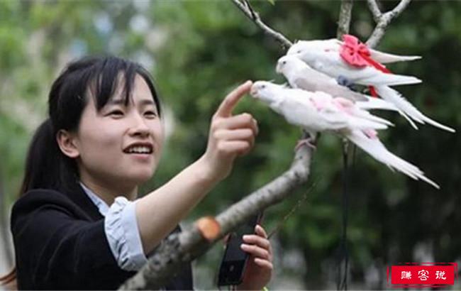 女孩做鸟用尿不湿 月入三万远销海外