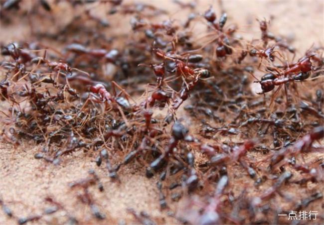 世界十大最危险的昆虫 疟蚊传播的疟疾最让人痛恨