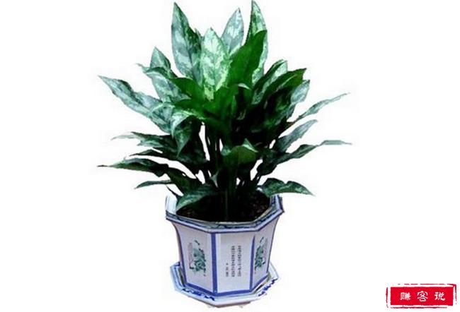 适合室内养的植物有哪些 十大室内最好养的植物排名