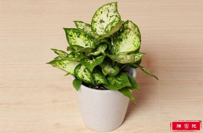 室内最好养的植物排名 仙人掌只能排第四
