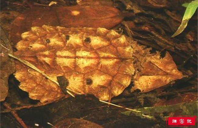 十大最好养的乌龟 宠物龟的种类有哪些